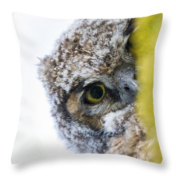 Peek A Boo Baby Owl Throw Pillow