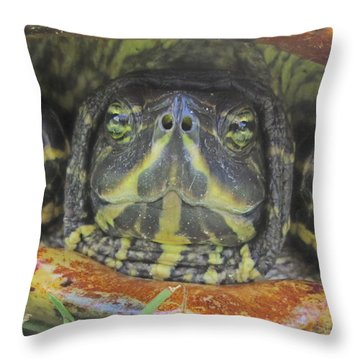 Peek A Boo Throw Pillow by Judith Morris