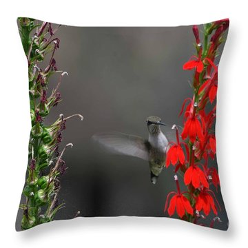 Peek A Boo Throw Pillow by Judy Wolinsky