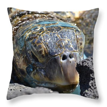 Peek-a-boo Turtle Throw Pillow
