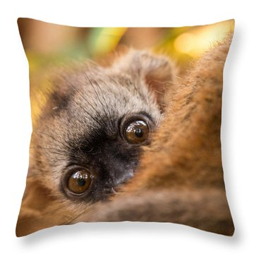 Peekaboo Throw Pillow by Alex Lapidus