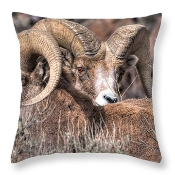 Peekaboo Bighorn  Throw Pillow