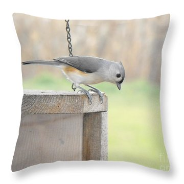 Peeking Chickadee Throw Pillow