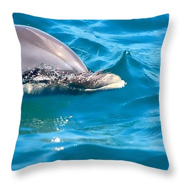 Peeking Dolphin Throw Pillow