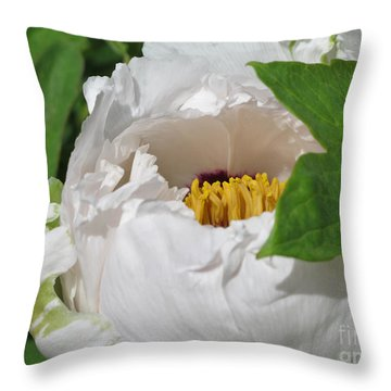 Throw Pillow featuring the photograph Peeking Out by Arlene Carmel