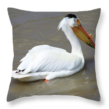Throw Pillow featuring the photograph Pelecanus Eerythrorhynchos by Alyce Taylor
