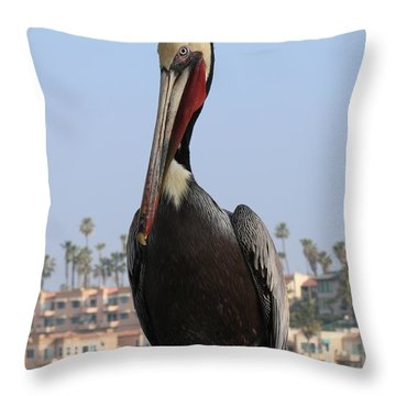 Throw Pillow featuring the photograph Pelican - 2  by Christy Pooschke