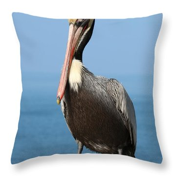 Pelican - 3  Throw Pillow by Christy Pooschke