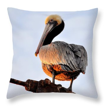 Pelican Looking Back Throw Pillow by AJ  Schibig