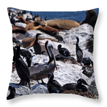 Throw Pillow featuring the photograph Pelican Visitor by Susan Wiedmann