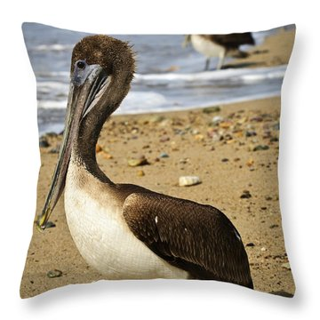 Pelicans On Beach In Mexico Throw Pillow by Elena Elisseeva