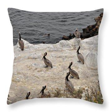 Pelicans Seals N Daisies  Throw Pillow