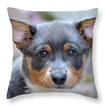 Pembroke Welsh Corgi Throw Pillow by Lisa Phillips