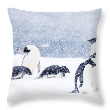 Penguins In The Snow Throw Pillow by Carol Walker