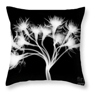 Pentaster Blossom X-ray Throw Pillow by Bert Myers