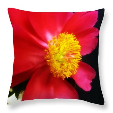 Peony Throw Pillow by Heather L Wright