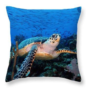 Pepe On Eldorado Throw Pillow by Carey Chen
