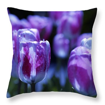 Throw Pillow featuring the photograph Peppermint Candies by Joe Schofield