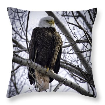 Perched Adult American Bald Eagle Throw Pillow