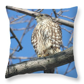 Perched Merlin Throw Pillow