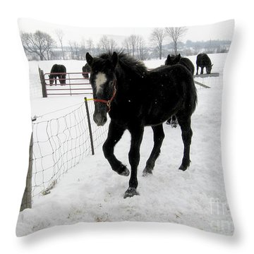 Percheron Horse Colt In Snow Throw Pillow