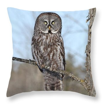Throw Pillow featuring the photograph Perching Perfect by Heather King
