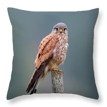 Perching Throw Pillow by Torbjorn Swenelius