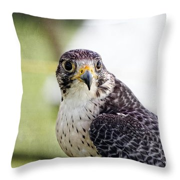 Throw Pillow featuring the photograph Peregrine Falcon Bird Of Prey by Eleanor Abramson