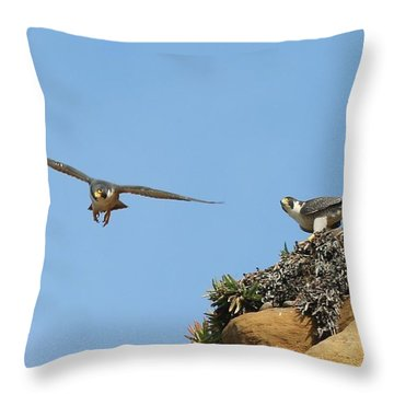 Peregrine Falcons - 1 Throw Pillow