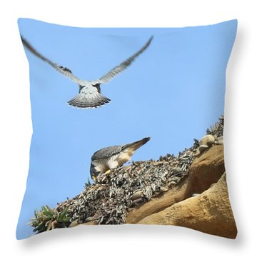Peregrine Falcons - 2 Throw Pillow