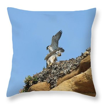 Peregrine Falcons - 3 Throw Pillow