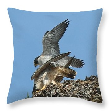 Peregrine Falcons - 4 Throw Pillow