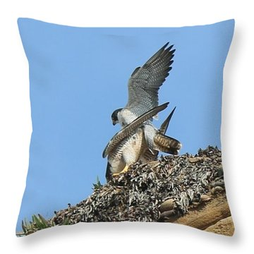 Peregrine Falcons - 5 Throw Pillow
