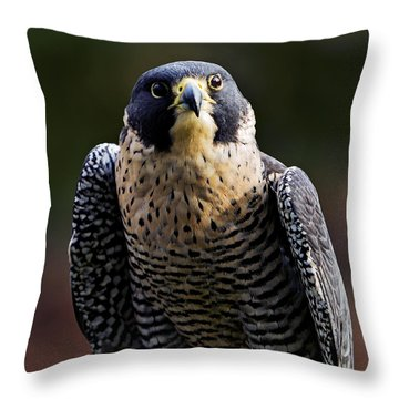 Peregrine Focus Throw Pillow by Mary Jo Allen