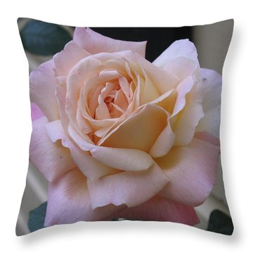 Perfect Blushing October Rose Throw Pillow by Barbara McDevitt
