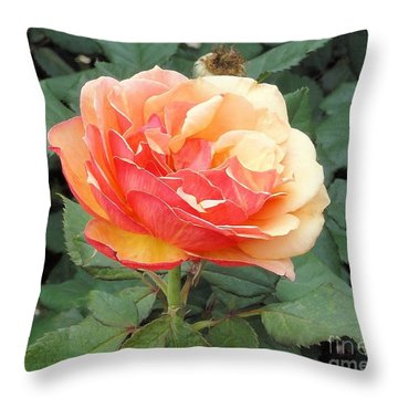Throw Pillow featuring the photograph Perfect Rose by Janette Boyd
