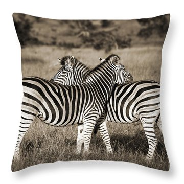 Perfect Zebras Throw Pillow by Delphimages Photo Creations