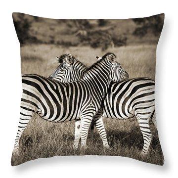 Perfect Zebras Throw Pillow