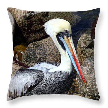 Peruvian Pelican Throw Pillow