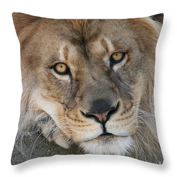 Pet Me Throw Pillow by Judy Whitton