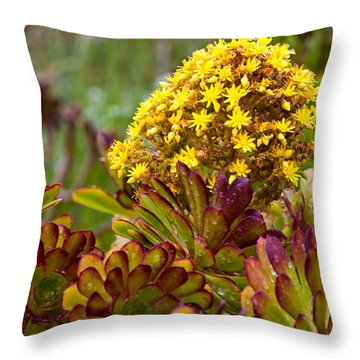 Petal Dome Throw Pillow by Melinda Ledsome