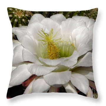 Throw Pillow featuring the photograph Petals And Thorns by Deb Halloran