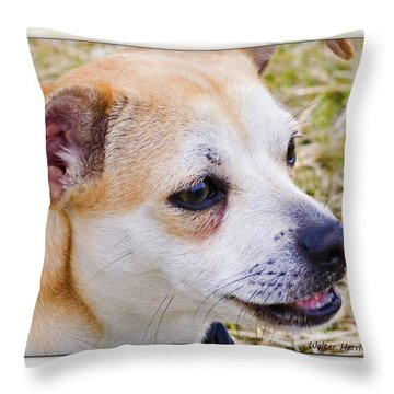 Pets Throw Pillow by Walter Herrit