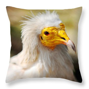 Pharaoh Chicken. Egyptian Vulture Throw Pillow by Jenny Rainbow
