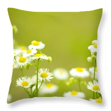 Philadelphia Fleabane Wildflowers In Soft Focus Throw Pillow