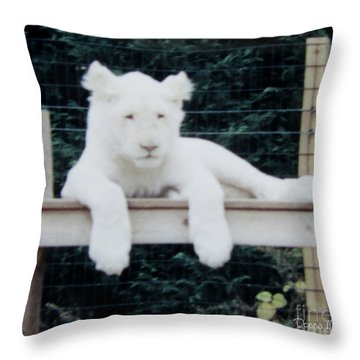 Throw Pillow featuring the photograph Philadelphia Zoo White Lion by Donna Brown