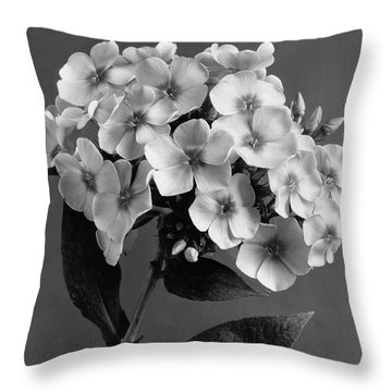 Phlox Blossoms Throw Pillow