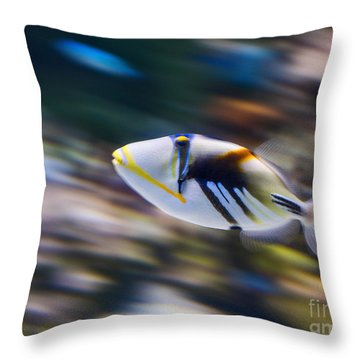 Picasso - Lagoon Triggerfish Rhinecanthus Aculeatus Throw Pillow by Jamie Pham