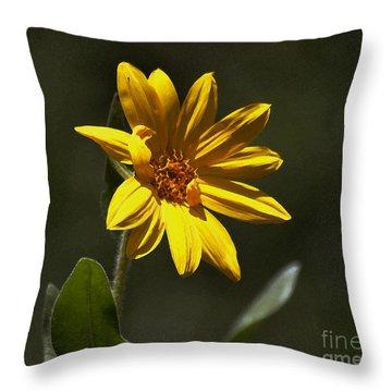 Pickin' Wildflowers  Throw Pillow by Juls Adams