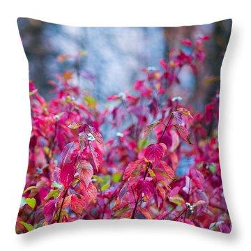 Picturesque Autumn - Featured 3 Throw Pillow by Alexander Senin